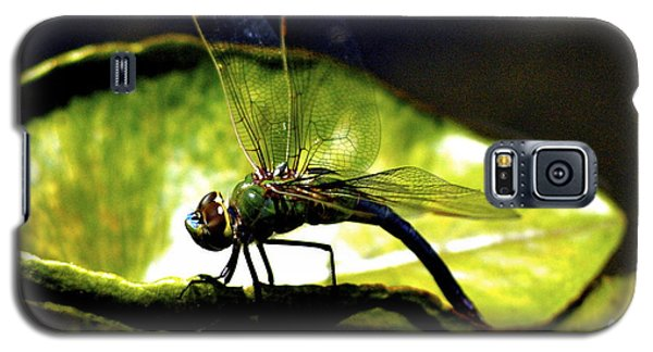Pinao The Hawaiian Dragonfly Galaxy S5 Case