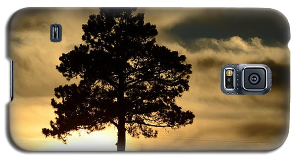 Pine At Sundown Galaxy S5 Case