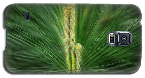 Pine Cone And Needles Galaxy S5 Case