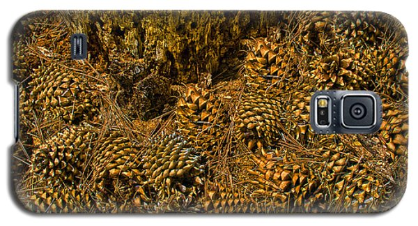 Galaxy S5 Case featuring the photograph Pine Cone Gathering by Joseph Hollingsworth