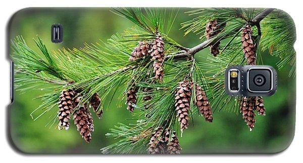 Pine Cones Galaxy S5 Case