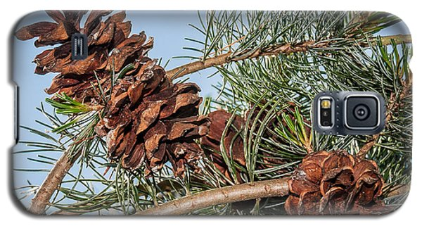 Pine Cones Galaxy S5 Case