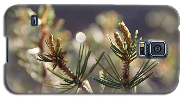 Galaxy S5 Case featuring the photograph Pine by David S Reynolds