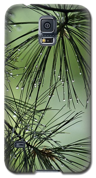 Pine Droplets Galaxy S5 Case by Judy  Johnson