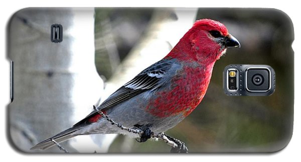 Pine Grosbeak Galaxy S5 Case by Marilyn Burton