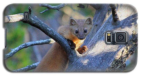 Pine Martin Galaxy S5 Case