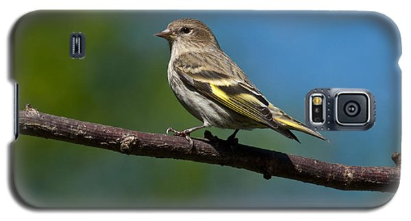 Pine Siskin Perched On A Branch Galaxy S5 Case
