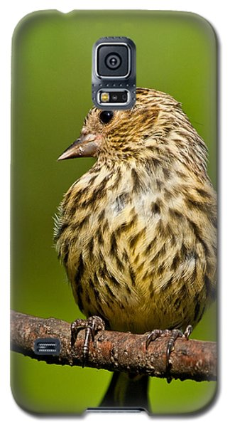 Pine Siskin With Yellow Coloration Galaxy S5 Case