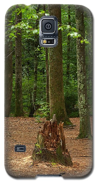 Pine Stump Galaxy S5 Case