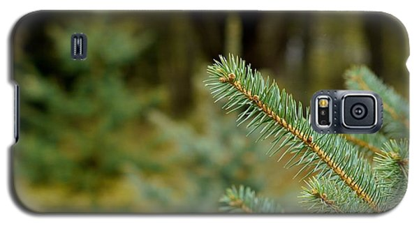 Galaxy S5 Case featuring the photograph Pine Tree by Alex King