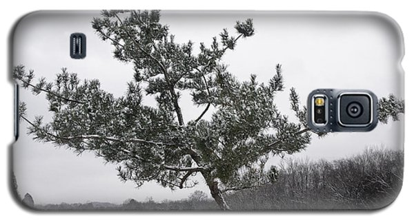 Pine Tree Galaxy S5 Case by Melinda Fawver