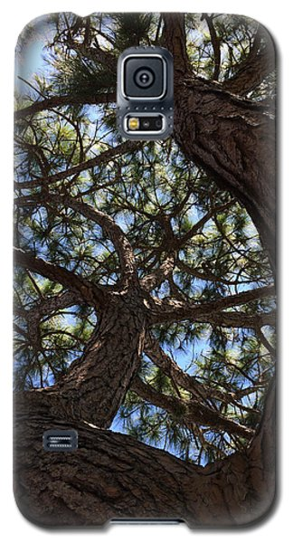 Pine Twist Galaxy S5 Case