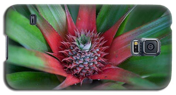 Pineapple Development Galaxy S5 Case