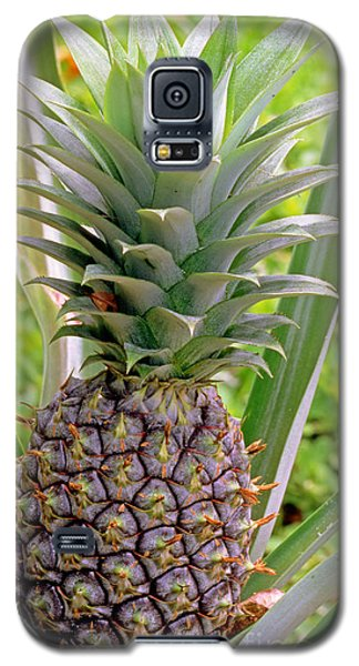 Pineapple Plant Galaxy S5 Case