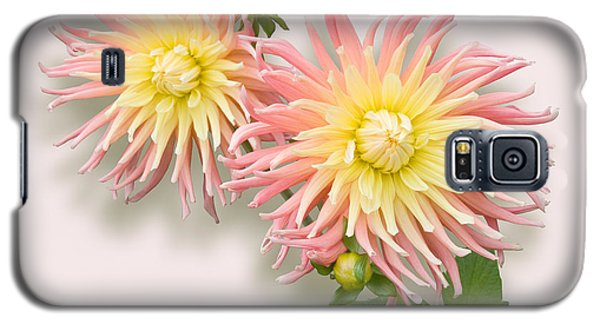 Galaxy S5 Case featuring the photograph Pink And Cream Cactus Dahlia by Jane McIlroy