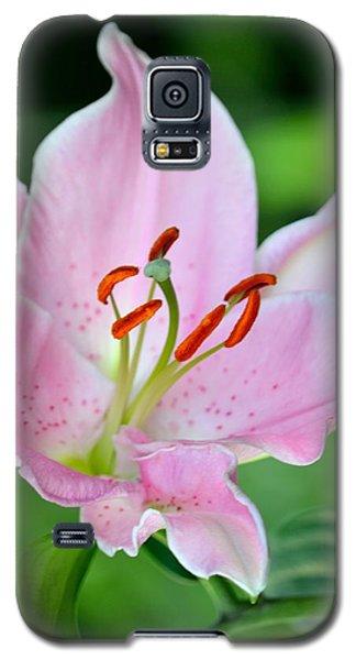 Pink And Orange Galaxy S5 Case