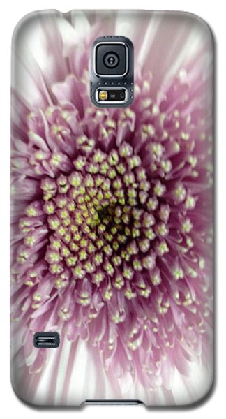 Pink And White Chrysanthemum Galaxy S5 Case
