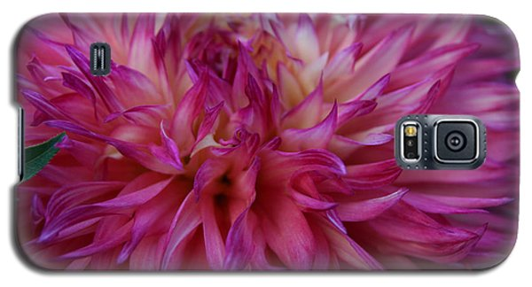 Galaxy S5 Case featuring the photograph Pink And White Dahlia  by Denyse Duhaime