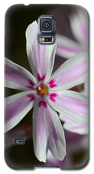Pink And White Galaxy S5 Case