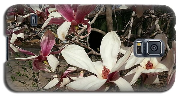 Galaxy S5 Case featuring the photograph Pink And White Spring Magnolia by Caryl J Bohn