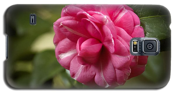 Galaxy S5 Case featuring the photograph Pink And White Stripped Camellia by Penny Lisowski