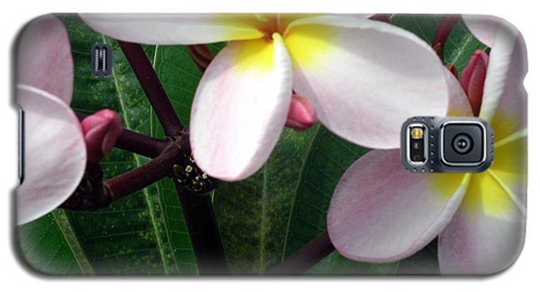 Galaxy S5 Case featuring the photograph Pink And Yellow Plumeria by Karen Nicholson