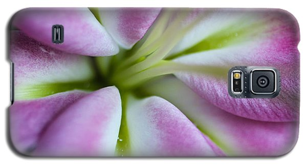 Pink Asiatic Lily Galaxy S5 Case by Julie Andel