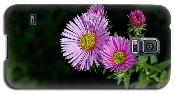 Galaxy S5 Case featuring the photograph Pink Asters On Black by Maria Janicki