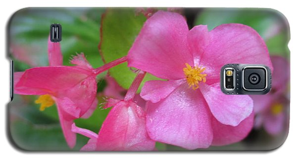 Pink Begonias Galaxy S5 Case by Barbara Yearty