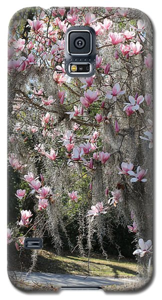 Saucer Magnolia Galaxy S5 Case - Pink Blossoms And Gray Moss by Carol Groenen
