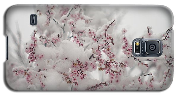 Pink Spring Blossoms In The Snow Galaxy S5 Case