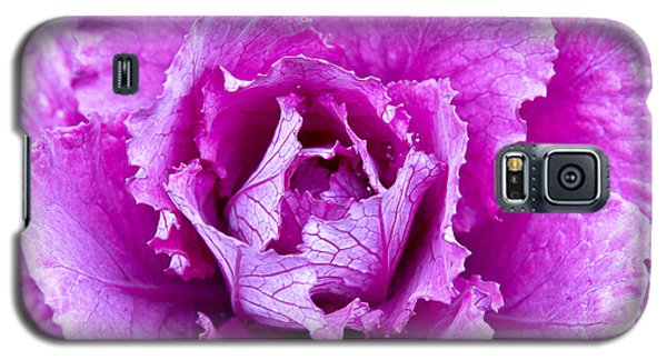 Galaxy S5 Case featuring the photograph Pink Cabbage by Crystal Hoeveler