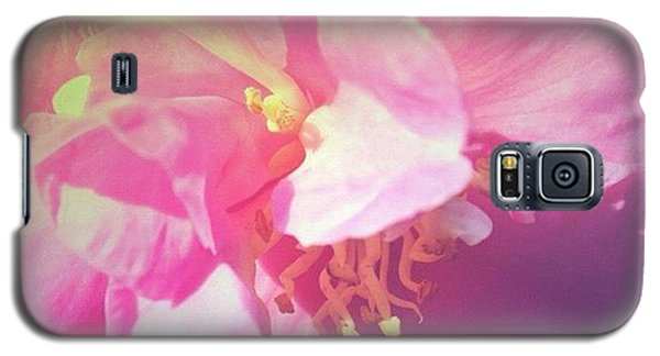 Pink Camellia Vintique Edit Galaxy S5 Case by Anna Porter