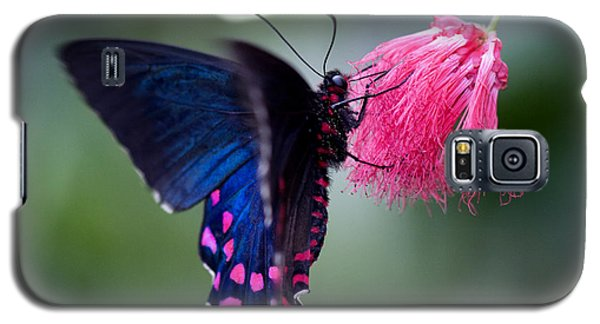 Galaxy S5 Case featuring the photograph Pink Cattleheart Butterfly by Zoe Ferrie