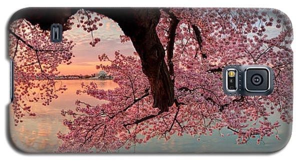 Pink Cherry Blossom Sunrise Galaxy S5 Case