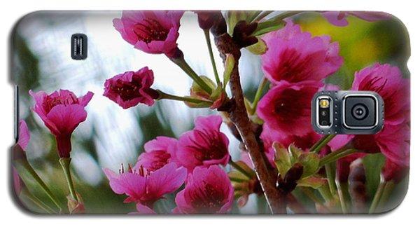 Pink Cherry Blossoms Galaxy S5 Case by Pamela Walton