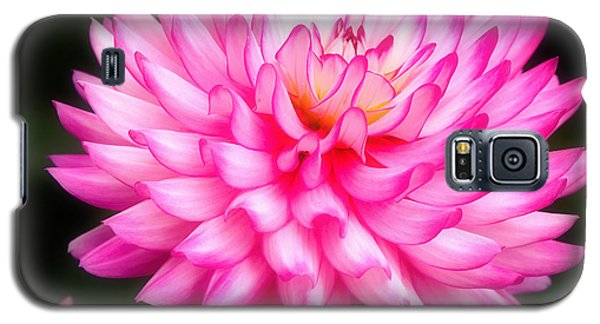 Galaxy S5 Case featuring the photograph Pink Chrysanths by Nick  Biemans
