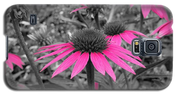 Pink Cone Flowers Galaxy S5 Case