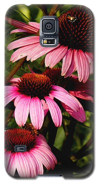 Galaxy S5 Case featuring the photograph Pink Coneflowers by James C Thomas