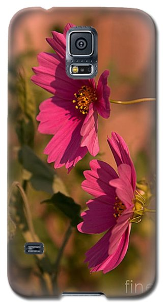 Galaxy S5 Case featuring the photograph Pink Cosmos  by Marjorie Imbeau