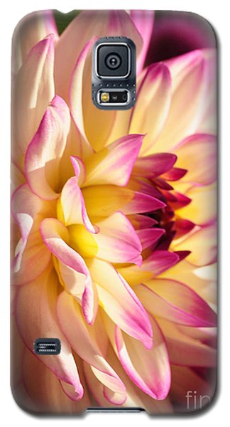 Galaxy S5 Case featuring the photograph Pink Cream And Yellow Dahlia by Olivia Hardwicke