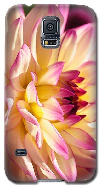 Pink Cream And Yellow Dahlia Galaxy S5 Case