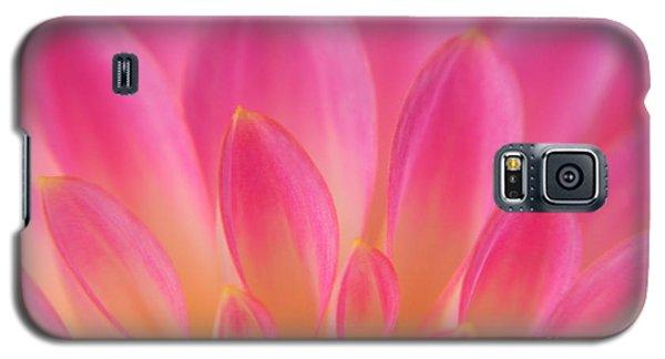 Pink Dahlia Close-up Galaxy S5 Case