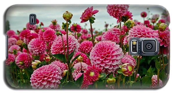 Pink Dahlia Field Galaxy S5 Case