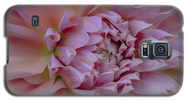 Pink Dahlia Galaxy S5 Case by Jacqui Boonstra