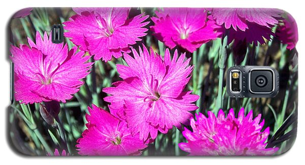 Pink Daisies Galaxy S5 Case