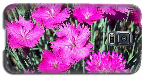 Galaxy S5 Case featuring the photograph Pink Daisies by Gena Weiser