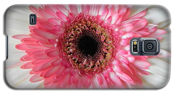 Pink Daisy Flower Galaxy S5 Case