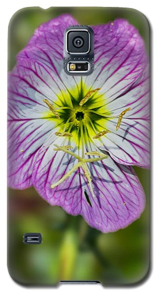 Pink Evening Primrose Galaxy S5 Case