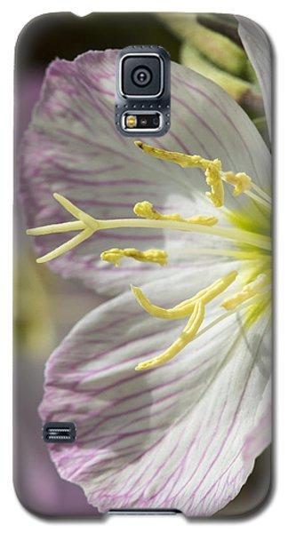 Pink Evening Primrose Flower Galaxy S5 Case